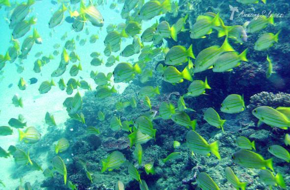 bunaken-marine-park-sulawesi-indonesia-14