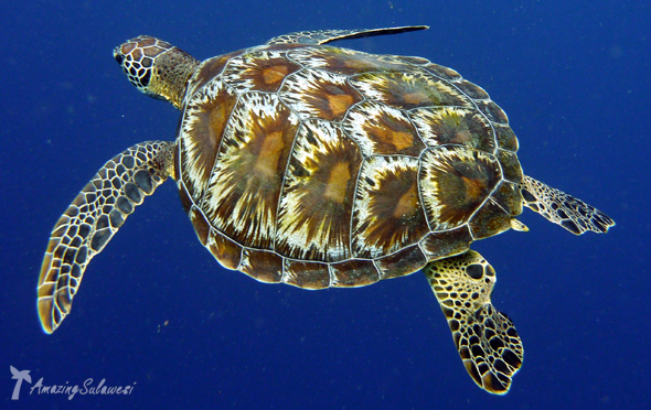 bunaken-marine-park-sulawesi-indonesia-15