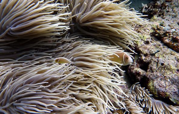 bunaken-marine-park-sulawesi-indonesia-18