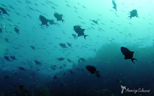 bunaken-marine-park-sulawesi-indonesia-2