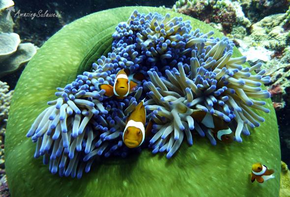 bunaken-marine-park-sulawesi-indonesia-20