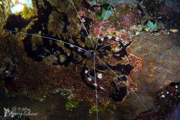 bunaken-marine-park-sulawesi-indonesia-28