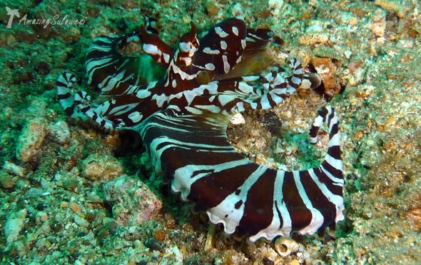 lembeh-island-sulawesi-indonesia-1