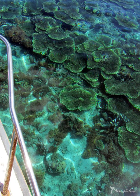 sulawesi-island-indonesia-6