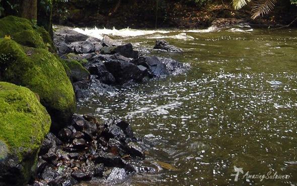 top10-sulawesi-lore-lindu-national-park
